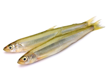 fresh water smelt: These are called wakasagi in Japanese freshwater fish  Stock Photo