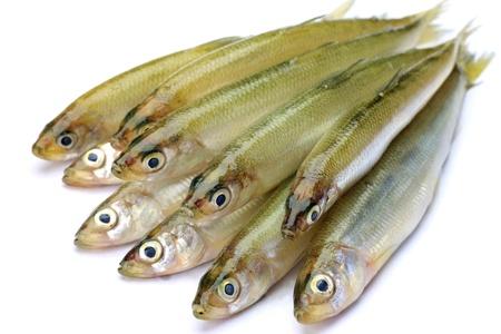 These are called wakasagi in Japanese freshwater fish  Stock Photo