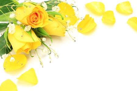 私は、白い背景上に黄色いバラ、かすみ草を取った。