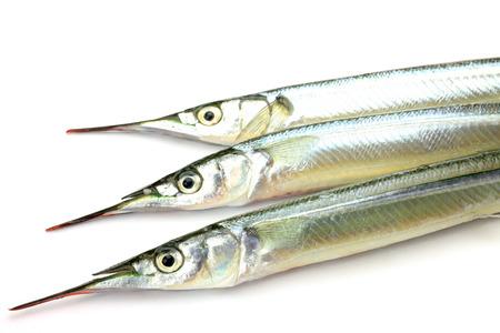 fishery products: halfbeak