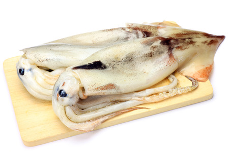 fishery products: cuttlefish