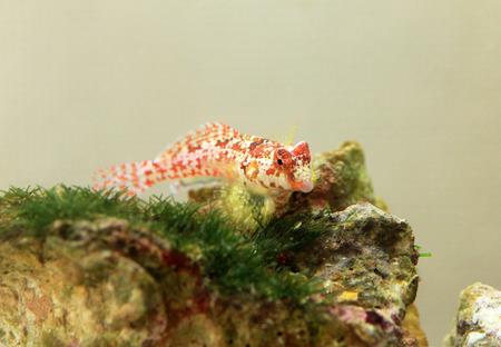 saltwater fish Archivio Fotografico