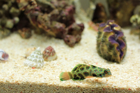 live coral: saltwater fish Stock Photo