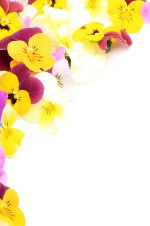 violas: pansy Stock Photo
