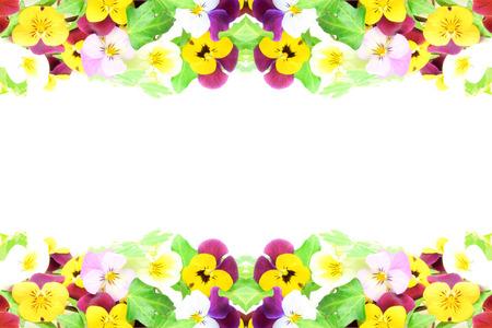 frame of flower