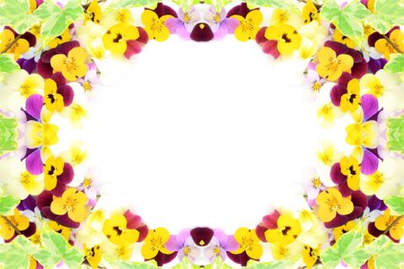 frame of pansy