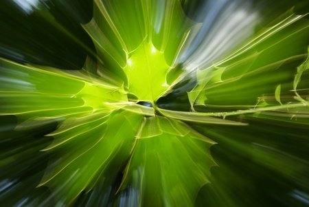abstrait: abstract effects on tree leaves, shigning light and movement. mystic nature, forest spirits.