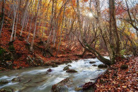 fairy forest: Autumn fairy forest in Crimea