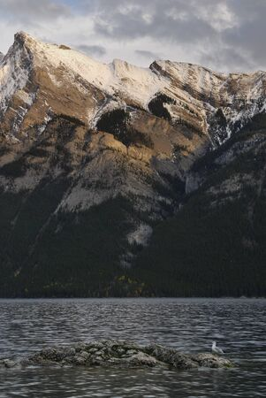 Seagull on rock in Lake Minnewanka in the Canadian Rocky Mountains