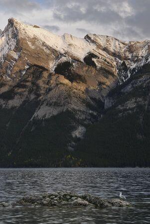 Seagull on rock in Lake Minnewanka in the Canadian Rocky Mountains