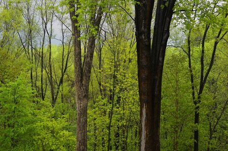 April showers in a fresh green forest in Spring Toronto Canada LANG_EVOIMAGES