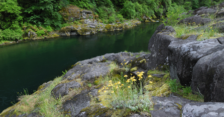 flowing water: Panorama of North Santiam river flowing around moss covered glacier eroded rocks