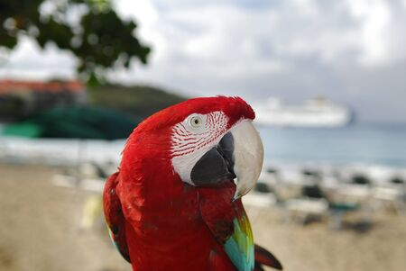Red and green parrot at a resort on the beach