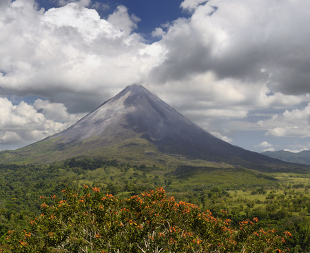 Smoking Arenal Volcano on San Carlos Plains in Costa Rica with orange Poro Tree flowers