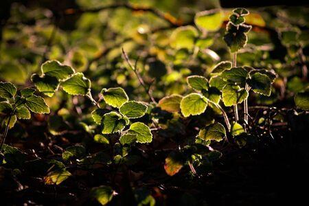 natur: natur in summer Stock Photo