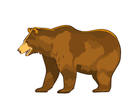 Vector illustration of bear Grizzly isolated on white background Vettoriali
