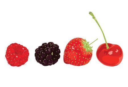 rasberry: Berry on white  Illustration