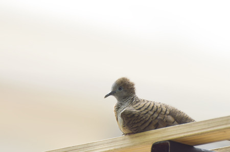 feel feeling: a dove sitting to rest Stock Photo