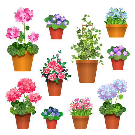 macro flower: Set of  flowers in pots isolated on white. Icons for design illustration