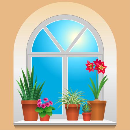 houseplants: Some houseplants on window  View inside room