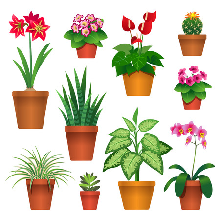 Set of houseplants in pots icons isolated on white