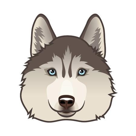 Husky hond hoofd geïsoleerd op wit. Vector illustratie