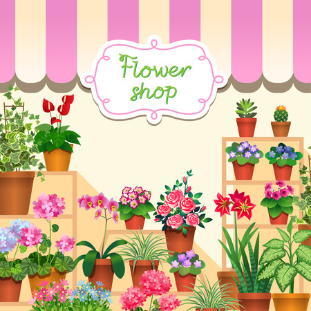 potted: Houseplants in show-window of flower shop.  Illustration