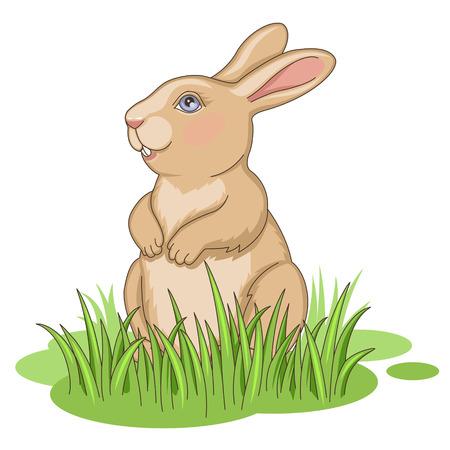 conejo caricatura: Conejo de Pascua sentado en la hierba verde aislado en blanco