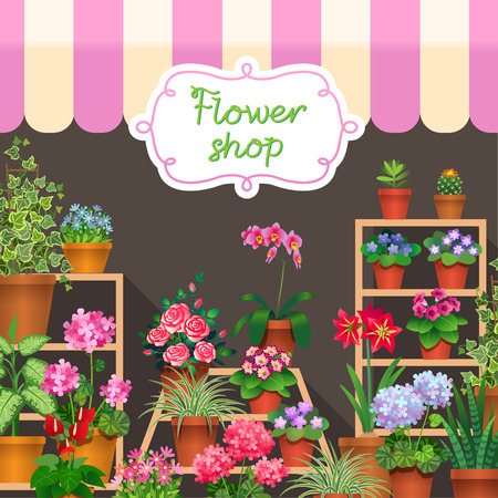 houseplant: Houseplants in show-window of flower shop.  Illustration