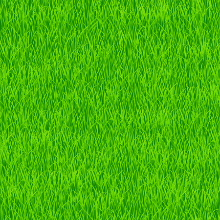 Green grass. Seamless pattern for your design 矢量图像