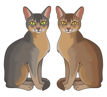 abyssinian: Set of two abyssinian cats isolated on white background Illustration