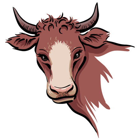 A cow's head isolated on white background. Color illustration for your design. Иллюстрация