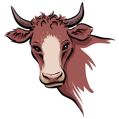 La cabeza de una vaca aislada en el fondo blanco. Ilustración de color para su diseño. Foto de archivo - 35314584