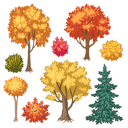 drawing trees: Set of cartoon autumn trees and shrubs isolated on white background