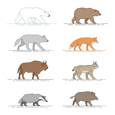 lynx: A set of figures of wild animals for infographics isolated on white background
