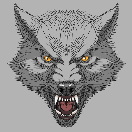 Head of angry roaring wolf, colorful illustration on grey background