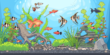 Rectangular horizontal aquarium with plants, accessories and fishes. Vector illustration of underwater landscape.