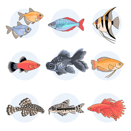 Popular aquarium fishes, Part 2. Set of colorful illustrations isolated on white background