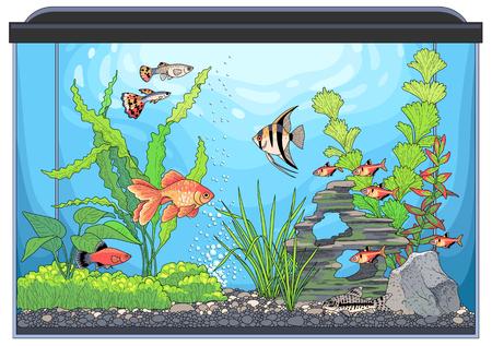 Podwodny krajobraz z zielonymi roślinami i kolorowymi rybami. Ilustracja wektorowa prostokątnego akwarium ze szkła, na białym tle