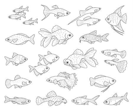 Poissons d'aquarium populaires isolés sur fond blanc. Ensemble d'illustrations noires monochromes à colorier