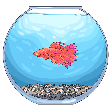 There is red betta fish in the round glass aquarium with pebble ground and blue water. Vector illustration, isolated on white background