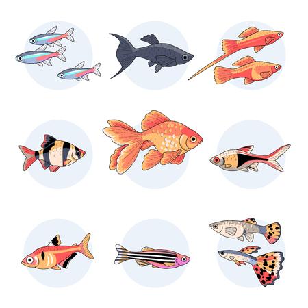 Peces de acuario populares, Parte 1. Conjunto de ilustraciones coloridas aisladas sobre fondo blanco