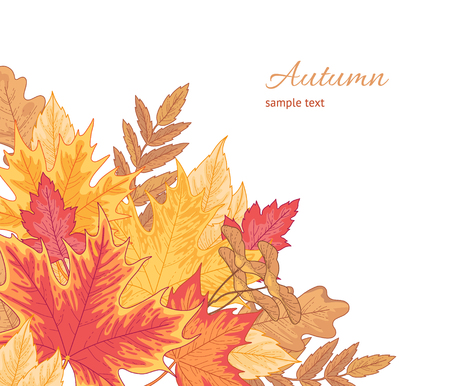 Composition of multicolor fallen leaves of maple, oak and birch on white. Autumn background for your design Archivio Fotografico - 108434305
