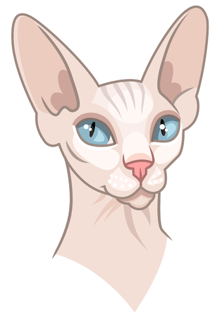 Portrait of sphinx cat. Cute cartoon character isolated on white background