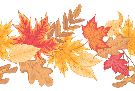 Seamless horizontal border of multicolor fallen leaves of maple, oak and birch isolated on white. Autumn gesign element for your design