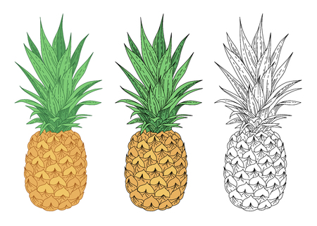 Pineapple isolated on white background. Color illustrations and black contour for coloring.
