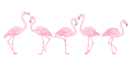 Set of pink flamingos isolated on white background. Elegant birds for your design and decoration