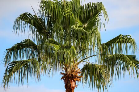 Close-up of plam tree in Playa de las Americas at canary island tenerife