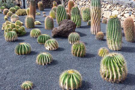Different types of cactus in Jardin de Cactus by Cesar Manrique on canary island Lanzarote, Spain