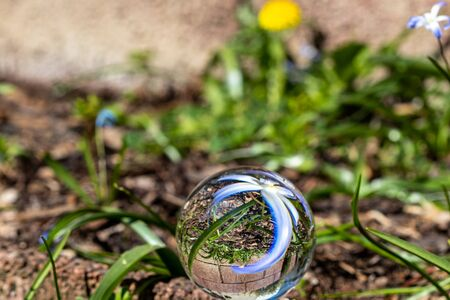 Crystal ball with blue hyacinth blossom on moss covered stone surrounded by green grass Archivio Fotografico